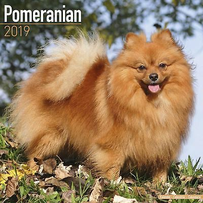 Pomeranian Official 2019 Wall Calendar New & Sealed