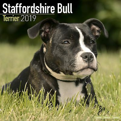 Staffordshire Bull Terrier Official 2019 Wall Calendar New & Sealed