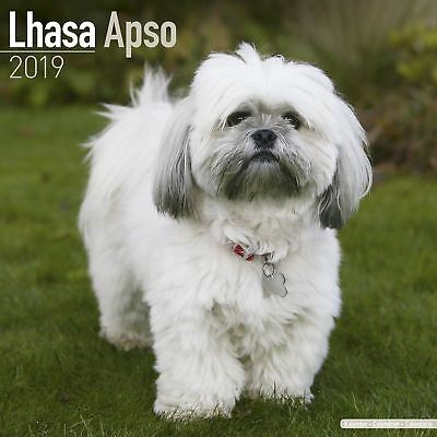 Lhasa Apso Official 2019 Wall Calendar New & Sealed