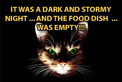 Funny Cat Meme Refrigerator Magnet (3 x 2) Dark Storm Night Scary Empty Food