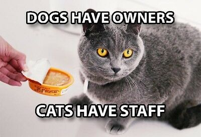 Funny Cat Meme Refrigerator Magnet (3 x 2) Dog Owner Staff Food Ignore Feed Cute