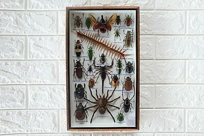 Real Spider And Mixed Insects Bug Beetles Taxidermy In Frame Home Decoration