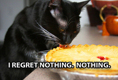 Funny Cat Meme Refrigerator Magnet (3 x 2) Regret Nothing Lick Pie Eat Steal