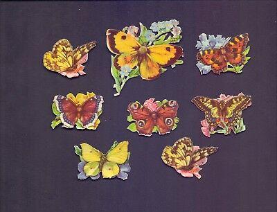 8 Nice Vintage,Scraps Butterflies Largest Scrap 60 x 50 mm (SB 43)