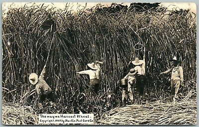 Wheat Harvest Exaggerated Antique Real Photo Postcard Rppc