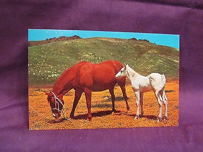 Chestnut Mare & Newborn Foal Horse Vintage Post Card To Mail Scrapbooks or Frame