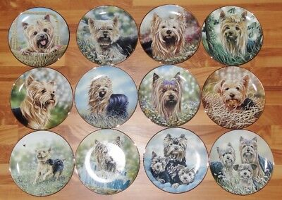 Entire Set ALL 12 Yorkshire Terriers Paul Doyle Collector Plates Danbury Mint