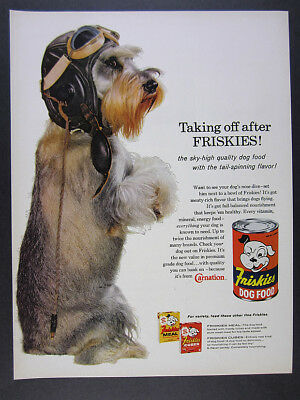 1960 Friskies Dog Food Schnauzer flying helmet goggles photo vintage print Ad