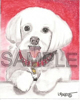 Maltese Dog Original Charcoal Drawing By L Royer #745 Biography C 0F A Included