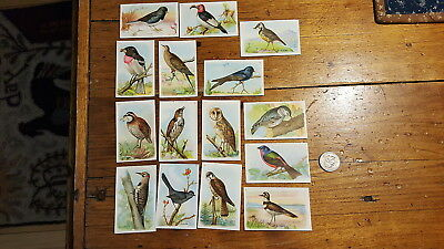 Antique ARM & HAMMER BIRD CARDS Useful Birds of America, 6th Series, 15 Cards