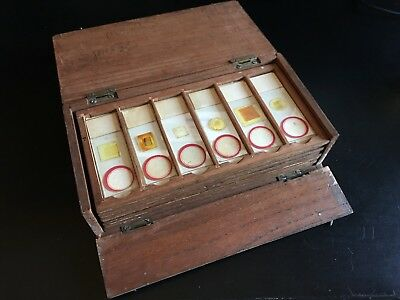 48 Microscope Slides in Mahogany Case