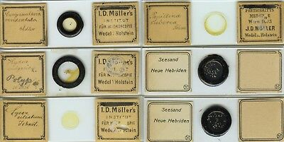 6 Aquatic Microscope Slides by Möller