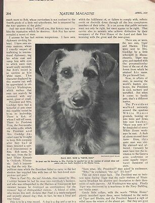 """1926 """"Paul Pry"""" Airedale Terrier- President & Mrs. Coolidge Dog - Magazine Page"""