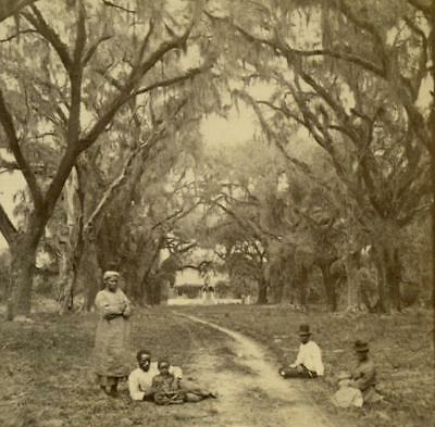 c1880 BLACK AFRICAN AMERICAN s UNDER LIVE OAKS w SPANISH MOSS, SOUTH CAROLINA SC