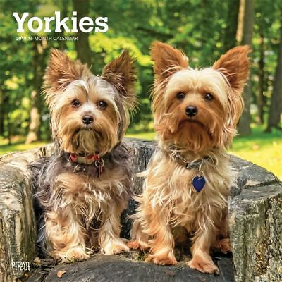 2019 Yorkshire Terrier Intnl Wall Calendar, Yorkshire Terrier by BrownTrout
