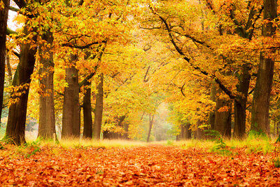 7X5 Beautiful Autumn Forest Studio Backdrop Photography Props Photo Background