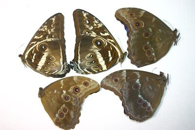 5 Mixed Morpho's in A- Condition