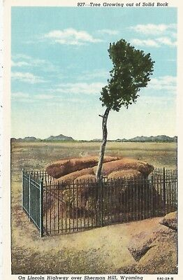 Sherman Hill WY Lincoln Highway Tree Growing Out Of Solid Rock Postcard 1929