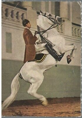 Lipizzan Horse Postcard from the Spanish Riding School in Vienna