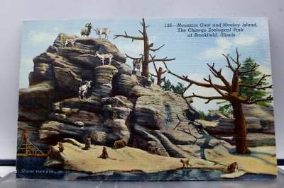 ILLINOIS IL BROOKFIELD Chicago Zoo Park Monkey Island Mountain Goat  Postcard Old