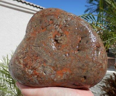 "ARIZONA DINOSAUR COPROLITE 8.3 lbs ""RED PETRIFIED DINO DROPPING"" Lapidary / GPS"