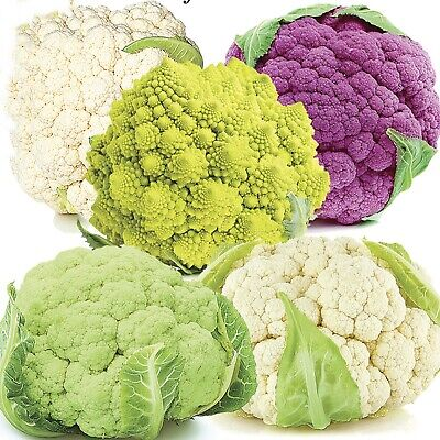 Vegetable Seeds Cauliflower Chefs Choice Mix Open Pollinated NON GMO