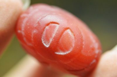Collection Tibetan natural Red Agate *Star&moon&sun* Totem dZi Bead Y59