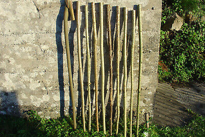 9 x hazel walking stick shanks 1 x willow unseasoned