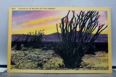 Scenic Desert Ocotillo Bloom Postcard Old Vintage Card View Standard Souvenir PC