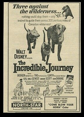 1963 The Incredible Journey Walt Disney cat dog movie vintage print ad