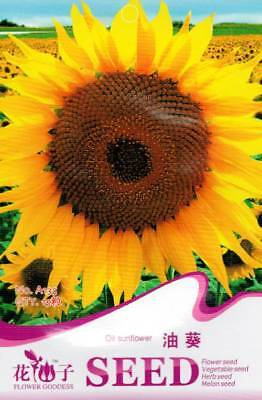Original Package 15 Oil Sunflower Seeds Helianthus Annuus A135
