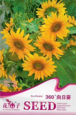 Original Package 15 Sunflower Seeds 360 Degree Helianthus Annus A280