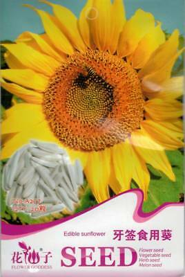 Original Package 20 Edible Sunflower Seeds Helianthus Annus A277