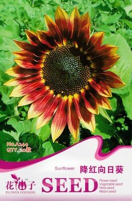 Original Package 20 Sunflower Seeds Helianthus Annuus A244