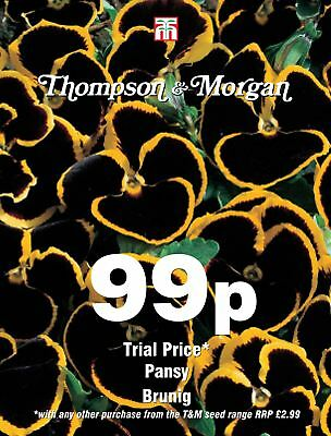 Thompson & Morgan - Flower - Pansy Brunig  - 25 Seeds
