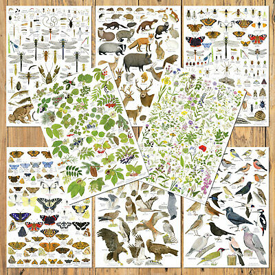 British Wildlife Identification Posters Birds Animals Nature Wild Flowers Trees