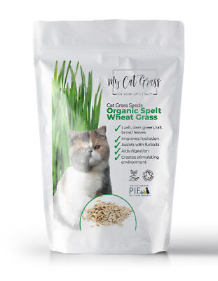Cat Grass Seed - Organic Cat Grass Seed by My Cat Grass