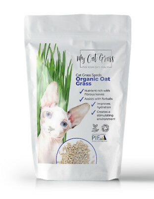 Cat Grass Seed - Organic Oat Cat Grass Seed by My Cat Grass