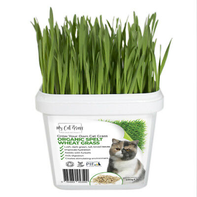 2 x Grow Your Own Cat Grass Kit - Organic Cat Grass Kit by My Cat Grass