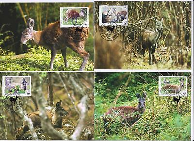 Afghanistan 2004 WWF - Himalayan Musk Deer - 4 Maximum Cards - (344)