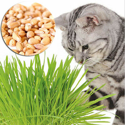 Organic Sweet Oat Grass Seeds Pets Cat Grass Juicing Sprouting Health Food 500g
