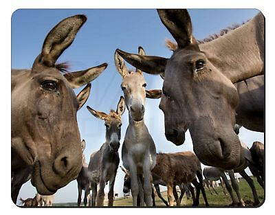 Donkeys Intrigued by Camera Computer Mouse Mat Christmas Gift Idea, DONK-2M