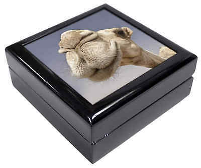 Camels Intrigued by Camera Keepsake/Jewellery Box Christmas Gift, CAM-1JB