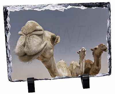 Camels Intrigued by Camera Photo Slate Christmas Gift Ornament, CAM-1SL