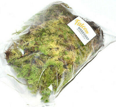 Fresh Welsh Green Moss For Hanging Baskets, Pots, Kokedama, Bonsai & Modelling