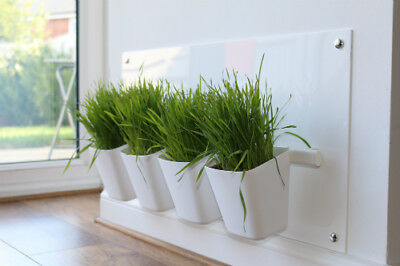 Cat Grass Station in White - by My Cat Grass™
