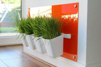 Cat Grass Station in Orange - Modern & Hygienic, by My Cat Grass™