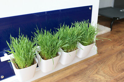 Cat Grass Station in Royal Dark Blue - Modern & Hygienic, by My Cat Grass™