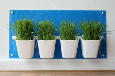 Cat Grass Station in Baby Blue - Modern & Hygienic, by My Cat Grass™