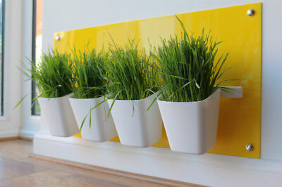Cat Grass Station in Canary Yellow - Modern, Hygienic by My Cat Grass™